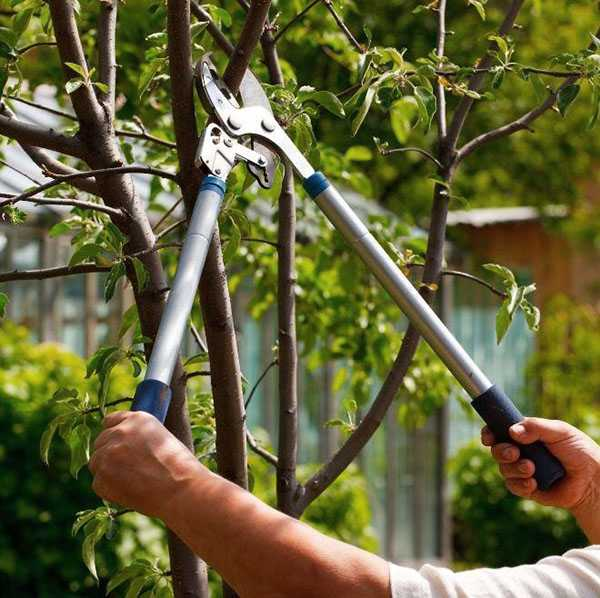 Лучшие кусторезы (садовые ножницы) — Рейтинг 2019