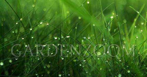 Можно ли косить мокрую траву бензиновым триммером, как он выглядит для покоса