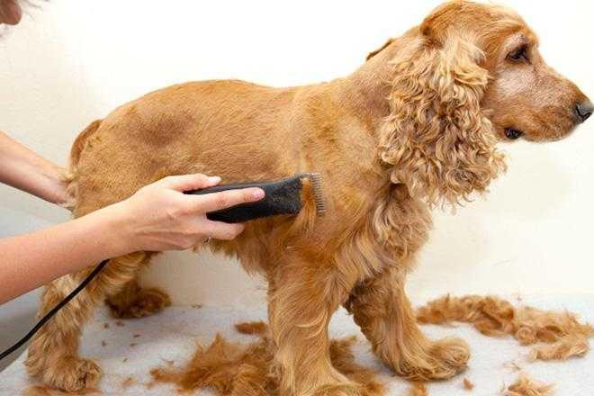 собака волос триммер лапа ногтей на АлиЭкспресс — купить онлайн по выгодной цене