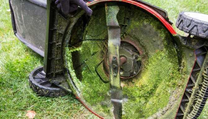Можно ли косить мокрую траву электрической газонокосилкой после дождя
