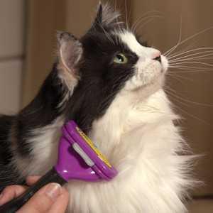 Фурминатор для кошки: выбор и использование   Блог ветклиники «Беланта»